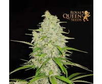Hulkberry (Royal Queen Seeds) 3 graines