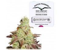 Auto Night Queen (Dutch Passion) 3 graines