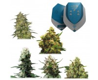 Melange Medicale CBD (Royal Queen Seeds) 5 graines