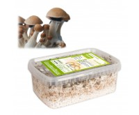 Kit de Culture de Champignons Magiques Mexicana (Ready-to-Grow Growkit)