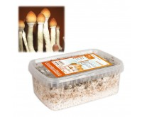 Kit de Culture de Champignons Magiques Thai (Ready-to-Grow Growkit)