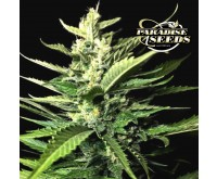 Auto Kong 4 (Paradise Seeds) 3 graines