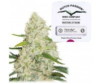 Think Big Autofloraison (Dutch Passion) 3 graines
