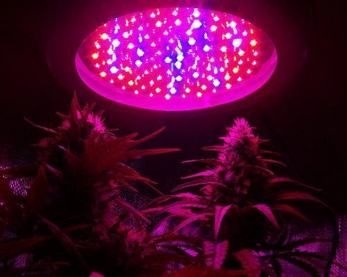 Lampe De Culture Led Pour Cannabis Avantages Et Inconvénients