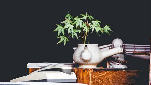 Floraison Blog Du Culture AutomatiqueMythes Cannabis À eWxordBC