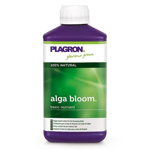 Alga Bloom Dutch Headshop