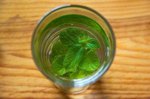 Boire du Salvia avec de l'eau Dutch Headshop